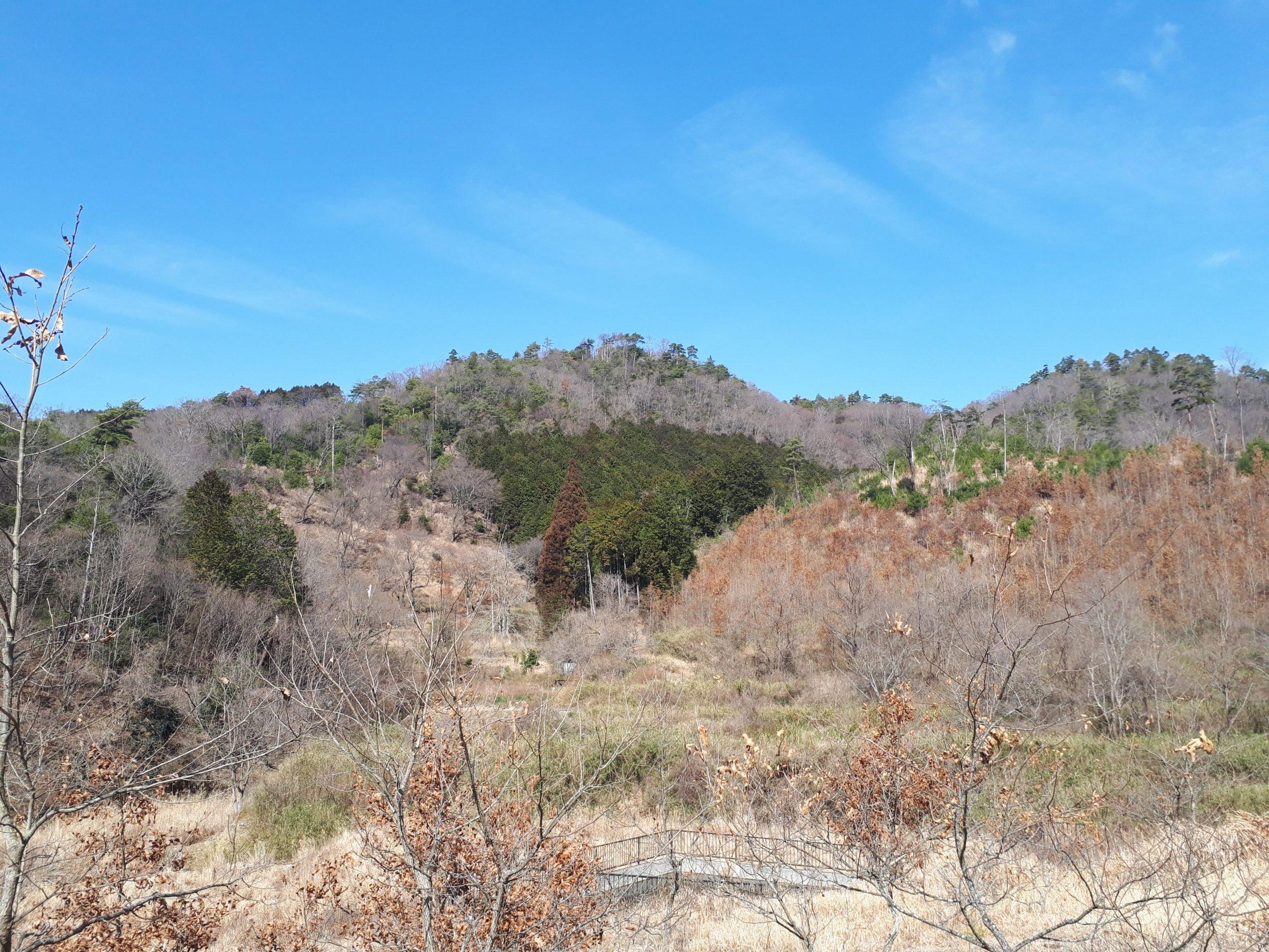 2月森のアトリエ~桜の森へ行ったよ~